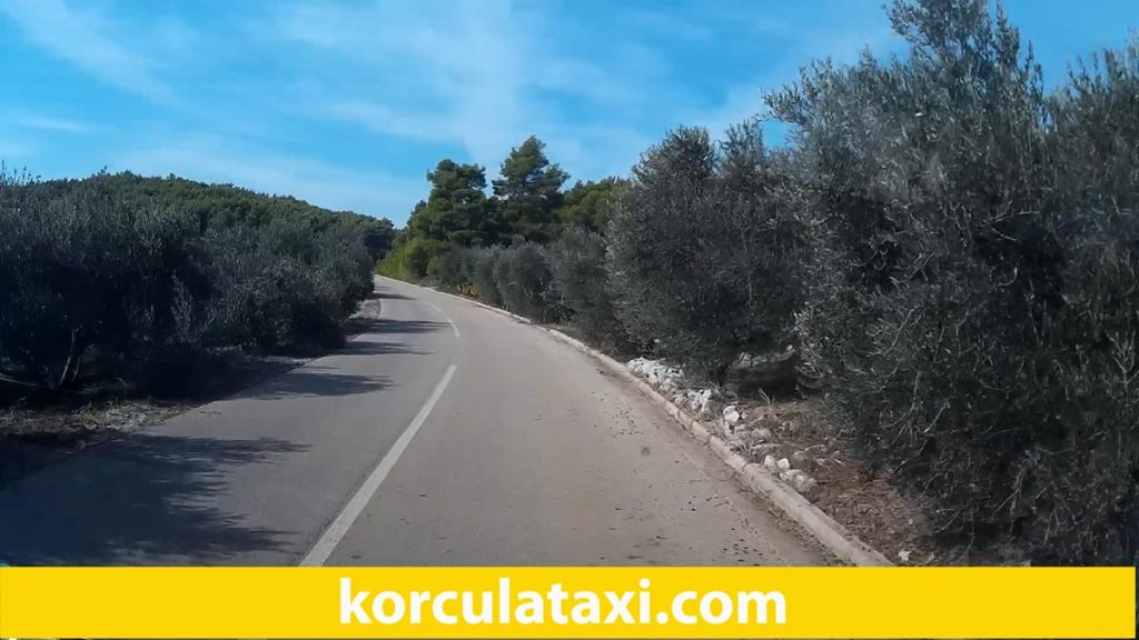 Olive Grove along the road